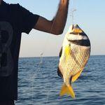 ماهیگیری و گشت دریایی قشم - @qeshm_fish_line - Instagram