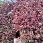 @alicia_hong_s2 - Instagram
