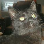 Ozzy_the Blackcat - @colleranamanda - Instagram