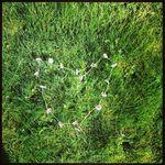 Amanda Lyttle - @mandalyttle - Instagram