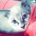 @amarilystamayo - Instagram
