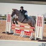 Amber Paddock - @paddock_equestrian - Instagram