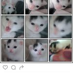amia crawford - @qutishafrawford - Instagram