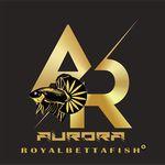 Aurora Betta Fish - @aurora_royal_bettafish - Instagram