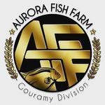 Aurora Fish Farm - @aurorafishfarm - Instagram