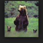 Bernadette Aragon - @momma_bear_love - Instagram