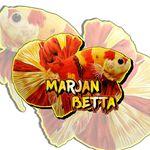 Marjan Betta Madura Bangkalan - @marjan_betta - Instagram