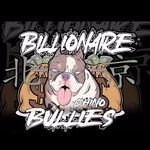 We Are Billionaire Bullies LLC - @billionaire_bullies_kennels - Instagram