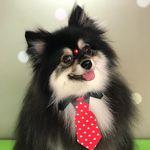 Bob Spitz 🐺 - @boobspitzalemao - Instagram