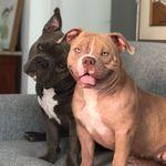 Bob e Stella - @bobstellatheamericans - Instagram