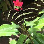 Bobbi Janson - @joyandwisdombutterflies - Instagram