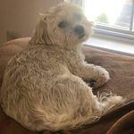 bobbi shapiro - @bobbishapiro - Instagram