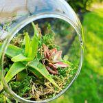 Bobbi Valdez - @succulently_yours_ - Instagram