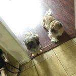 Bobby The Dog Keaton - @boonk_bobby - Instagram