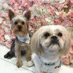 Bonnie & Tilly - @bonnieandtilly - Instagram