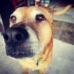 Brandon Tufts - @b2thetufts - Instagram