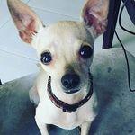 Brandy Antonio - @brandyantonio56 - Instagram