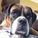 Brandy Eddings - @brandy44mn - Instagram