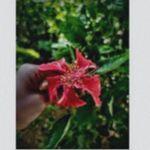 Brandy Marcheck - @sahilkaratay70487 - Instagram
