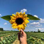 Brantwood Farms - @brantwoodfarms - Instagram