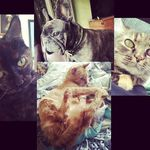 Burt, Owens, Pickles, & Pudgy - @bopp_tribe - Instagram