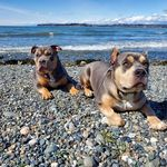 Butch & Bronson - @butch_and_bronson - Instagram