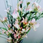 Catherine Gaines - @catherinegaines66 - Instagram