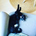 Colette Fitch - @colette_the_black_bitch - Instagram