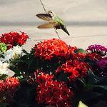 Colleen Dotson Durbin - @mcdurbin - Instagram