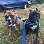 Dudley & Cornelius - @dudleyandcornelius - Instagram