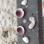 Diane Tolliver - @dianetolliver - Instagram