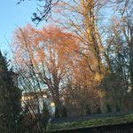 Dorothea Fink - @finkdorothea - Instagram