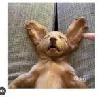 DOGS GETTING HURT - @dogsgettinghurt - Instagram