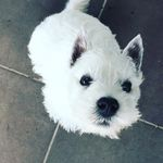 Sir Douglas McDougal - @sirdouglasmcdougal - Instagram