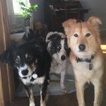 Drusilla Carter - @threedogsinanoutback - Instagram