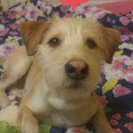 Duke Little - @_duke_the_dog._ - Instagram
