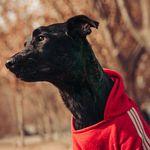 Duke Antonio Regalón - @duke.lopez.morales - Instagram