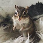 Eddie Lind - @eddie.chipmunk - Instagram