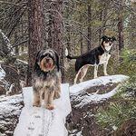 Rose Bear & Eleanor Wilbur - @rose_and_eleanor - Instagram