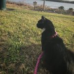 Eliza Arena - @eliza._.dolittle - Instagram