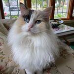 Elizabeth Benenati - @benenati649 - Instagram