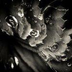 Frederick Forbes - @frederickforbes - Instagram