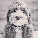 Gabriel Coffman - @gabriel.yomom - Instagram