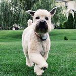 Gertie - @gertrudemcgillicuddy - Instagram