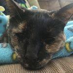 Gina Nocera - @kya_the_rescue_tortie - Instagram