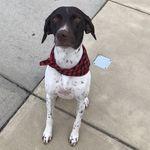 Piper Herbert - @piper_andfriends - Instagram