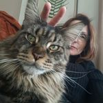 Maine Coons at Feather Hill - @judy.gaines.37 - Instagram