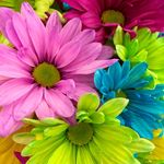 Laurie Pierson - @lauriepierson666 - Instagram