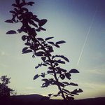 @leoladudley - Instagram