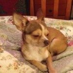 Lola Mackey - @lola_the_dog2344 - Instagram